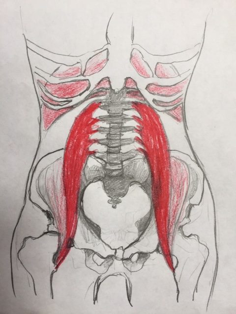 Your Vital Psoas Muscles