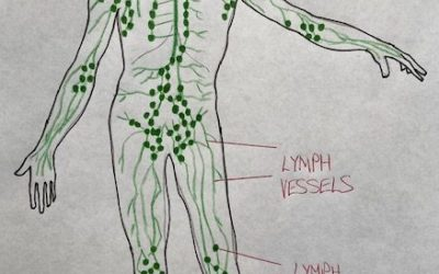How is your immune system?